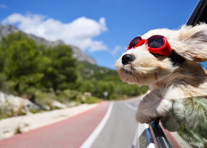 vacances avec animal de compagnie